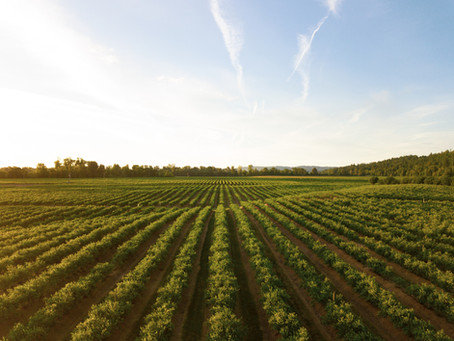 5 Very English Vineyards