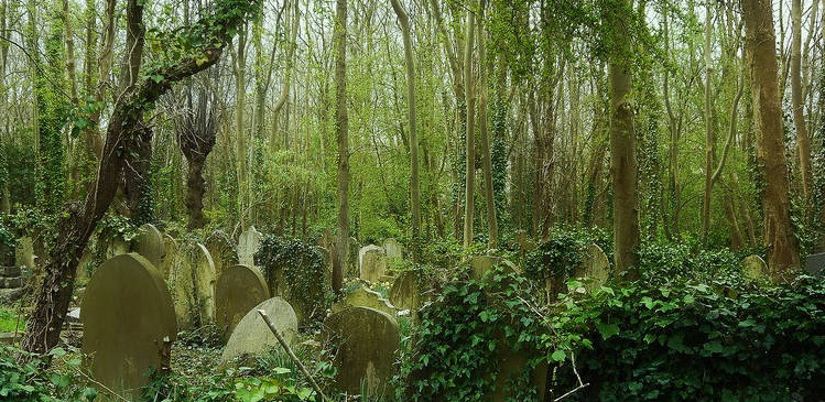 Highgate cemetery overgrown ivy and trees with graves