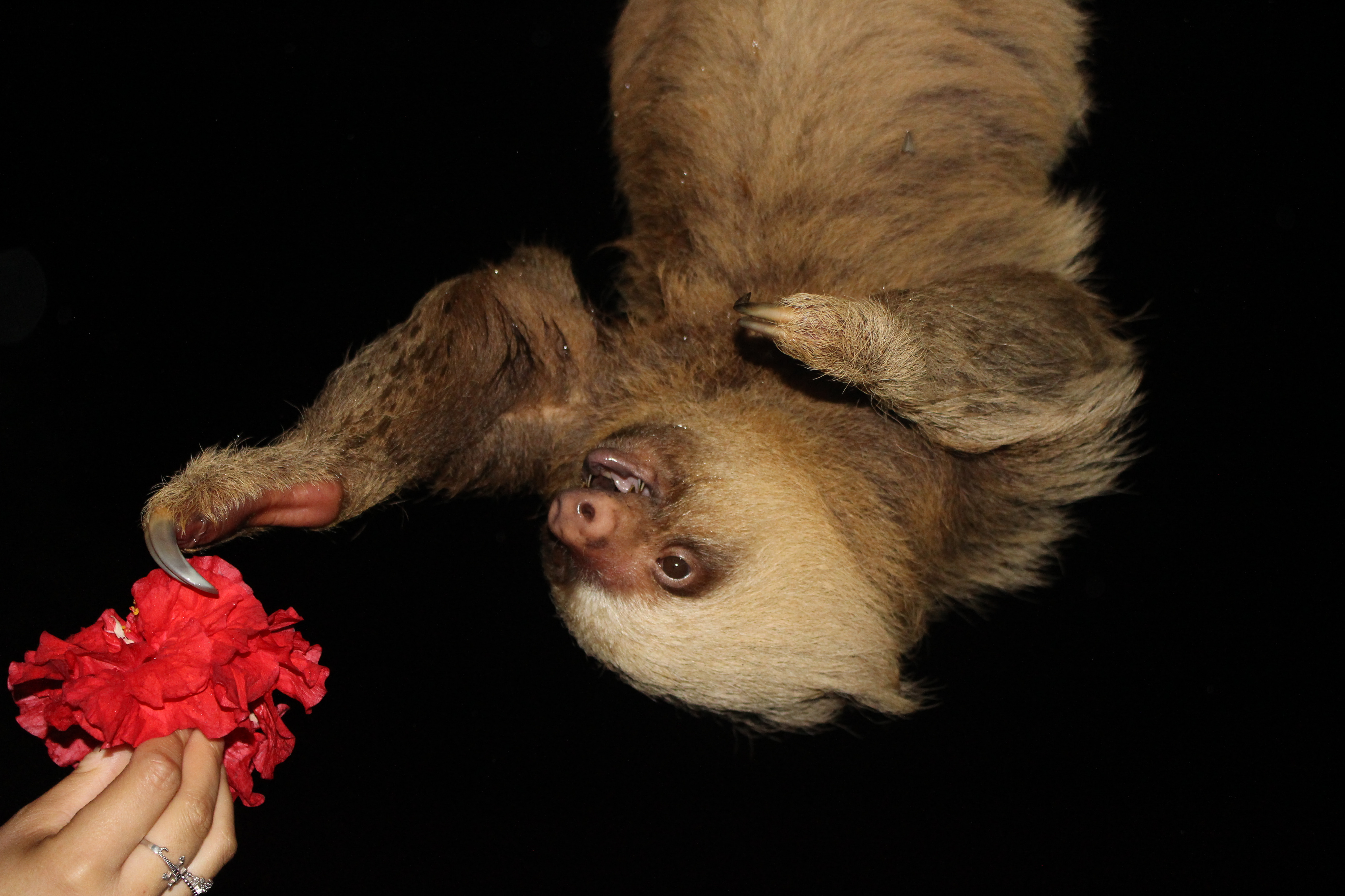 Sloth Tour