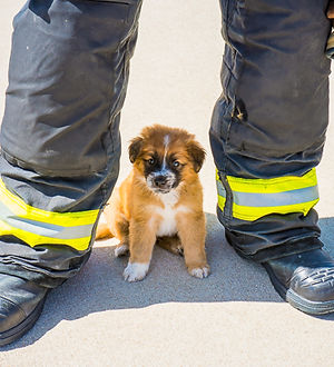 Fire Rescue Dogs Calendar - Firefighter Calendar benefiting Lifeline Puppy Rescue.