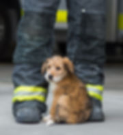 Firefighter and Puppy