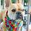 Thumbnail: Rainbow Dogs - Bandana