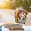 Thumbnail: Birthday Boy - Bandana