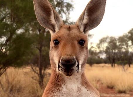 LANDMARK CASE - AUSTRALIAN COURT REFUSES CONSENT FOR COAL MINE BASED ON CLIMATE CHANGE IMPACTS