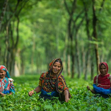 Teas Providing Futures for Families