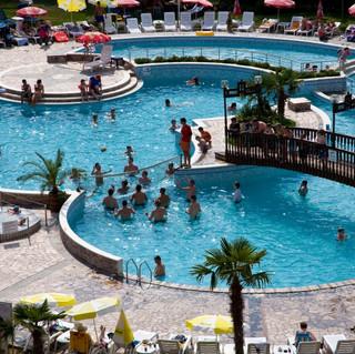 Hrizantema-Pool.jpg