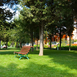 Hrizantema-garden.jpg
