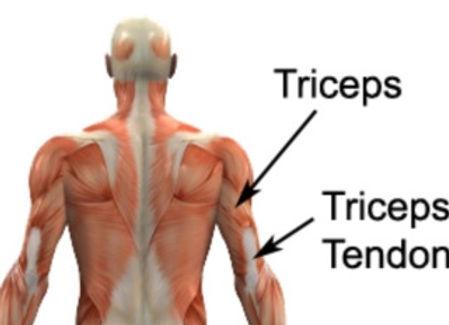 Triceps_edited.jpg