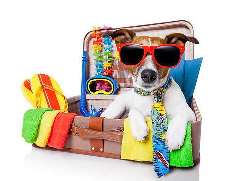 pet-travel-suitcase-dog-1100x825.jpg