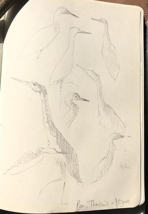Egret in Pai.