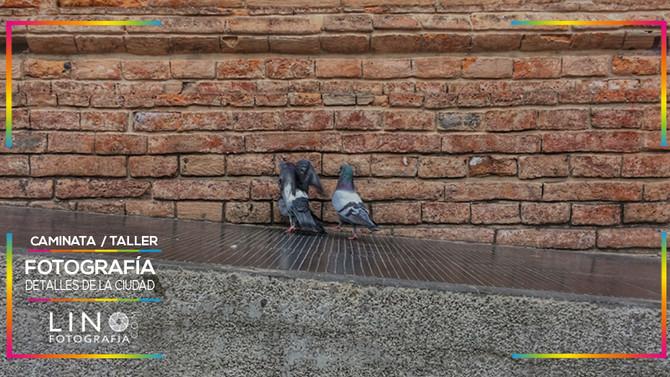 LINO Fotografía se une y apoya al proyecto El Contenedor con PhotoWalks