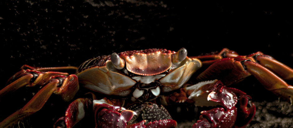 Life Below - The Crab