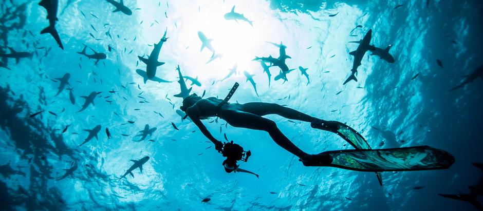 Interview with Shark Conservationist Madison Stewart
