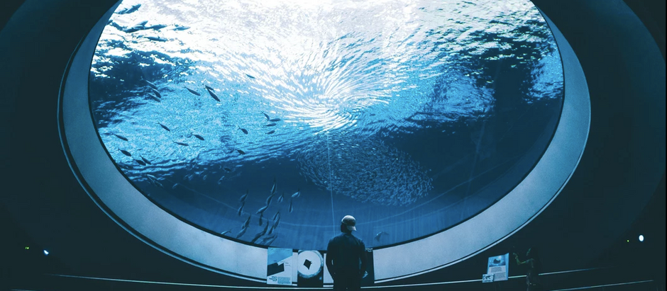 Aquarium Industry- imprisonment of wild animals,- or a vital encounter with the world below surface?
