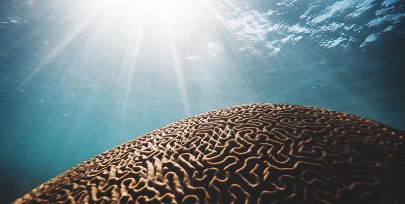 Coral Crisis