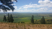 Picture of h Palouse Hills