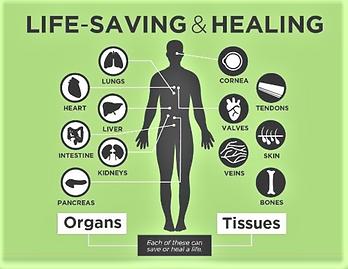 organ donation-2.png