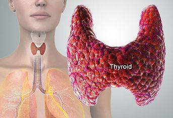 thyroid-1.jpg