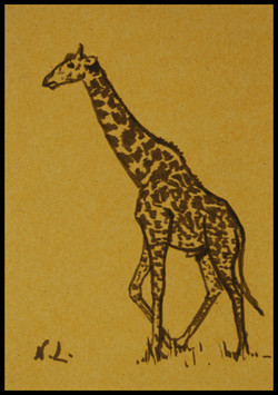 La girafe.The giraffe,