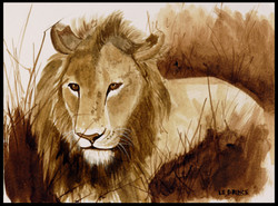 Lion couché. Slept lion