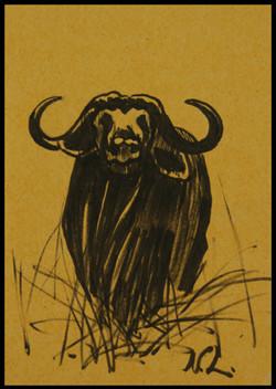 Buffle. Buffalo