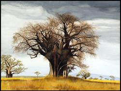 - Gouache, Baobab avant l'orage, Baobab before the storm, 50 x 65 cm - copie