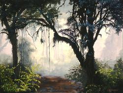 Jungle dans le brouillard.