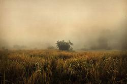 Plaines de Langwa. 2