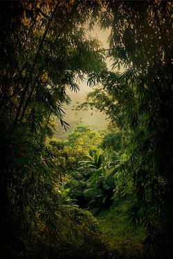 La route de la jungle.