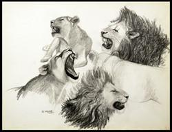 Rugissements. Howlings,