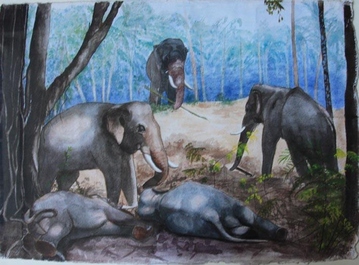 Eléphants en famille.