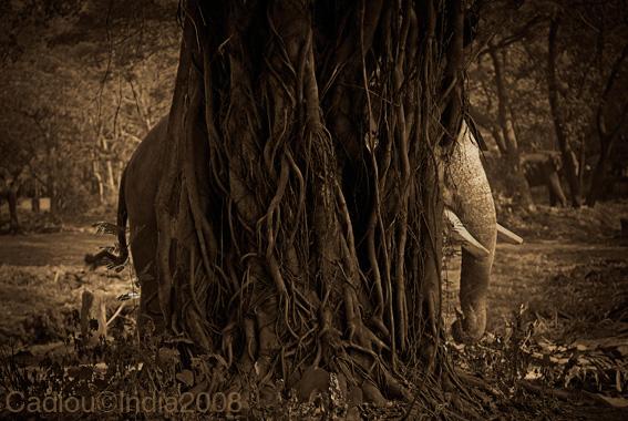 Hidden place - Joël Cadiou