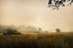 Plaines de Langwa. 1