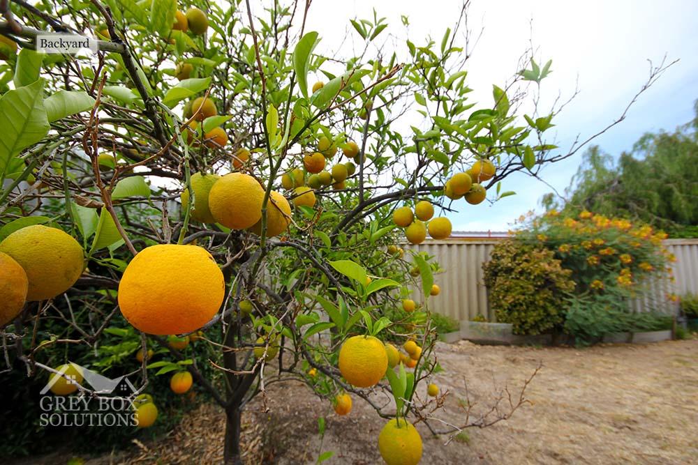 12 - Fruit