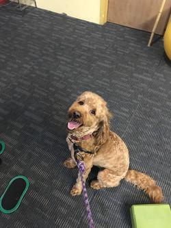 bestgyminatlantatoseecutedog