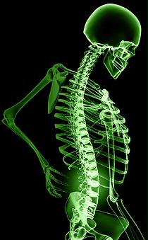 Xr-ayed-Skeleton-02.png