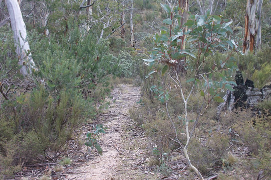 Sams Creek Fire Trail