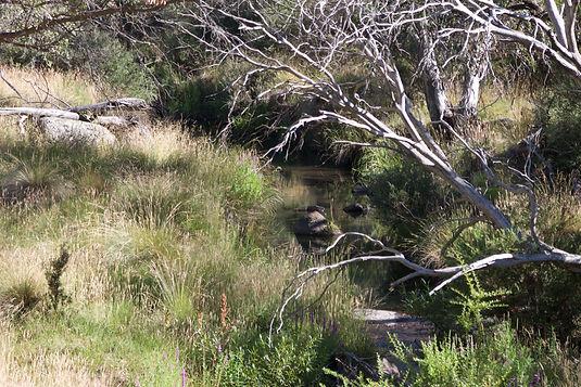 Rendezvous Creek