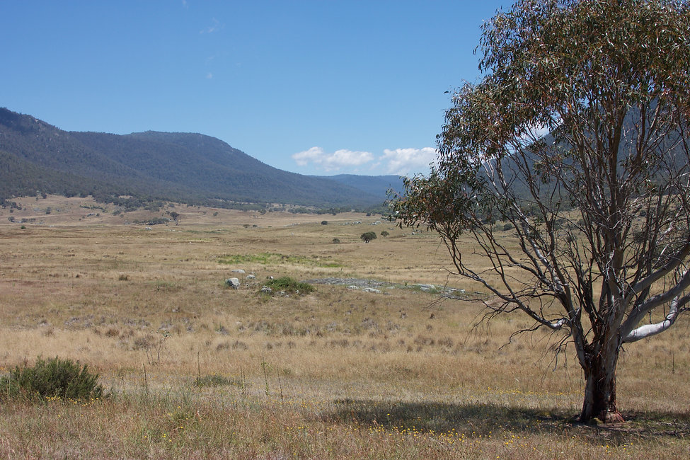 Rendezvous Creek Valley looking to the north west