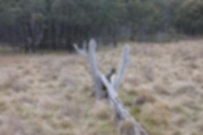 Lone Pine Homestead Ruins