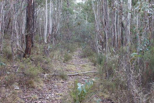 Bimberi Wilderness