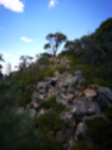 The climb to Tidbinbilla Peak