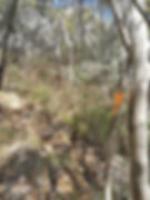 Orange tape marking walking track to Mt Tidbinbilla