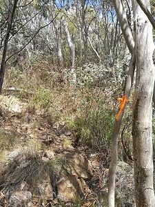 Orange tape marking walking track to Mt Tidbinbilla