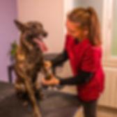 Ostéopathie canine