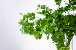 parsley-4688651_1920.jpg