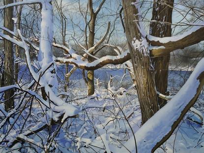 Trees Along the Huron River