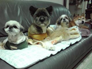 犬年の今年、我が家の子供たち(若かりし頃)