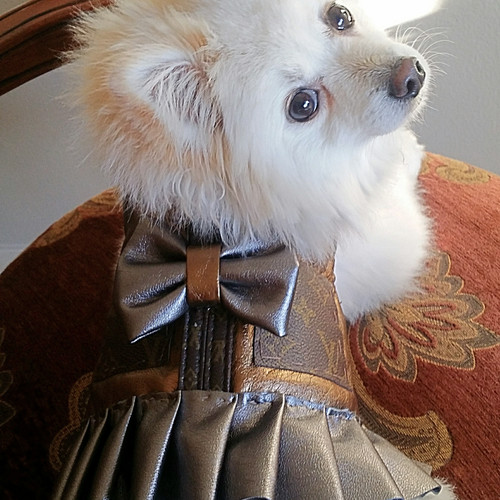 Dog Designer Clothes Louis Vuitton | Tobyandpucci Pawsome Shop