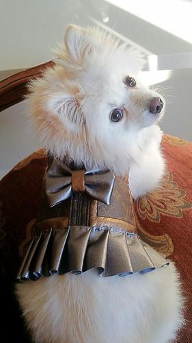 310815f2755a Louis Vuitton inspired harness dress